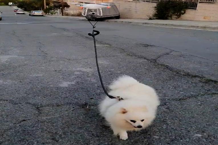 Kendi karantinada, köpeği drone ile gezmede