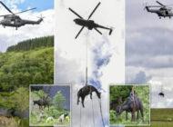 İngiltere'de RAF helikopleri inekler için havalandı